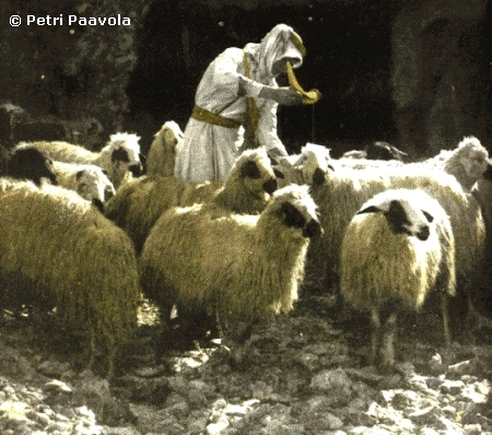 The Shepherd In Picture Sheds Oil Onto Head Of Sheep Protected From Sunstroke Was Also Added To Cuts On